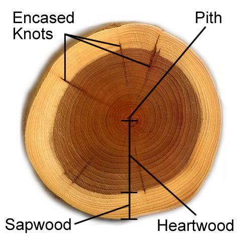 What Is Wood Part 1 Split Wood Didges Making