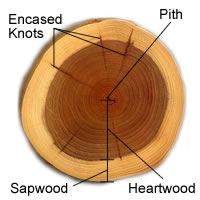 Cross Section of Timber